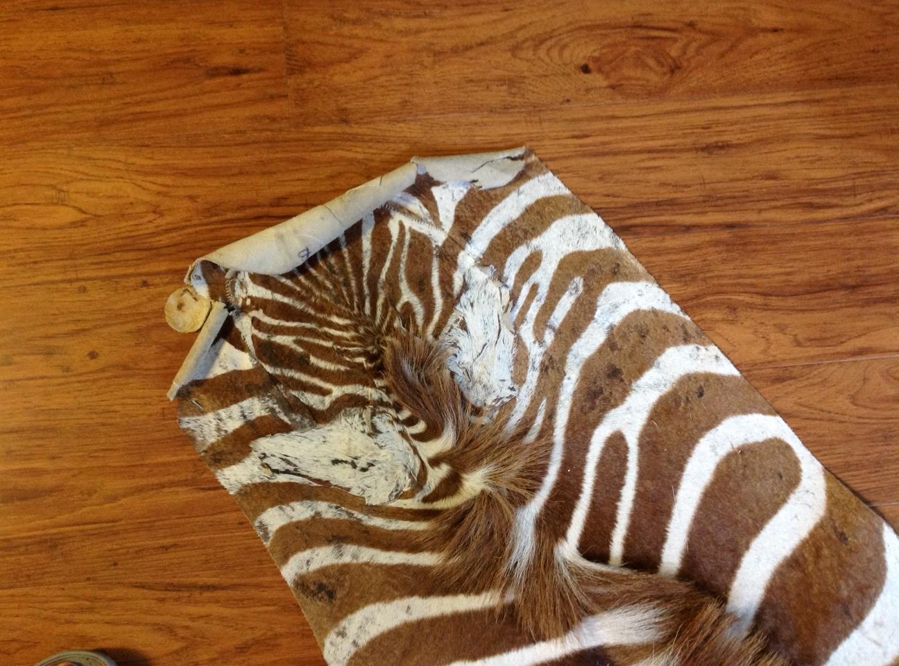 Name:  zebra 5.jpg Views: 363 Size:  532.4 KB