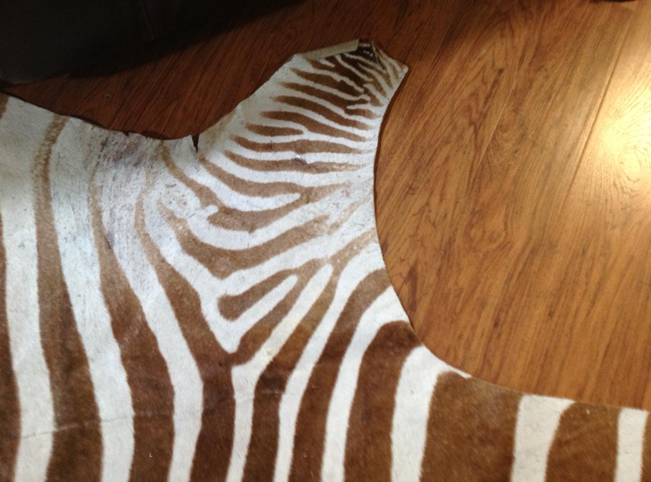 Name:  zebra 4.jpg Views: 341 Size:  419.1 KB