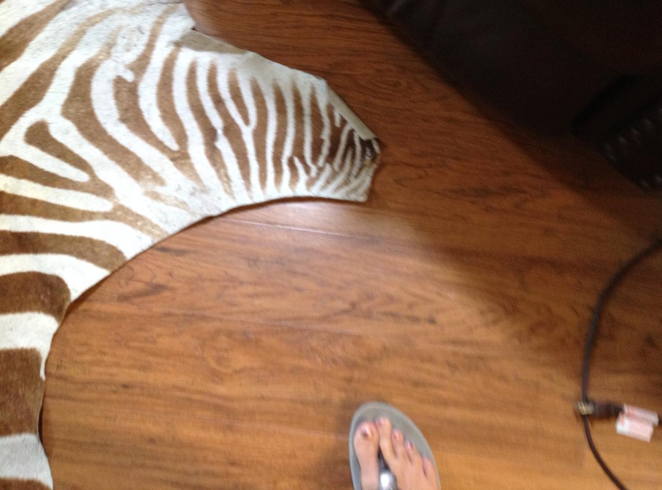 Name:  Zebra 1.jpg Views: 315 Size:  382.9 KB